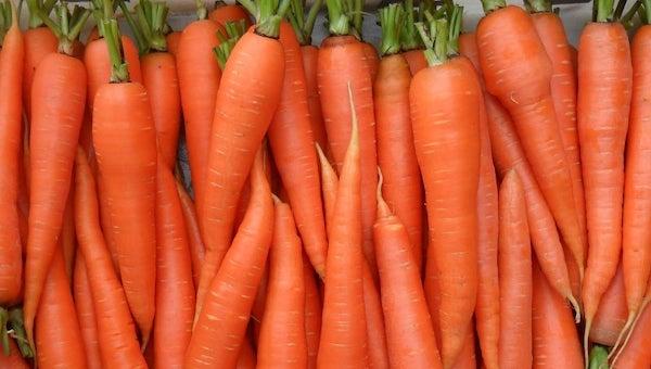 Сколько овощей вырастили серпуховские фермеры?