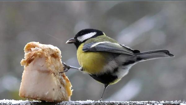 Как продвинуться на птицах?