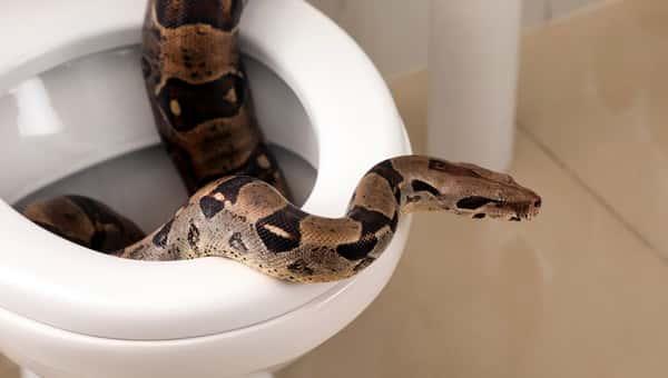 Минприроды запретит заводить в квартирах и частных домах диких животных
