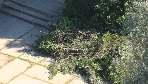 На Лесном бульваре в Протвино выпилили деревья