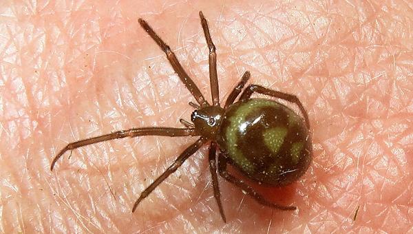 В подмосковном супермаркете продавали виноград с ядовитыми пауками