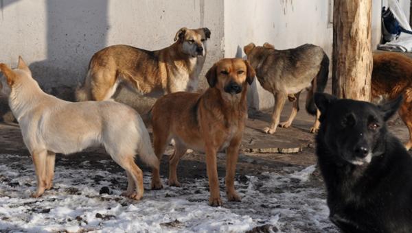 В Серпуховском районе решено разобраться с безнадзорными животными.