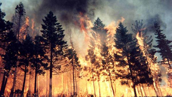 Пожарный сезон в подмосковных лесах закрыт