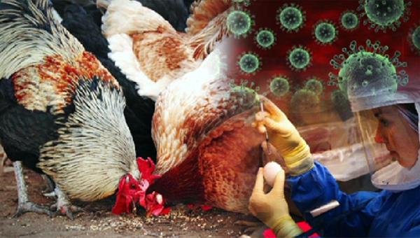 Продукцию практически 40 русских птицефабрик запретили кввозу вКазахстан