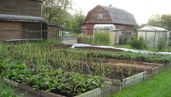 Какие перемены ждут садоводов в 2019 году?