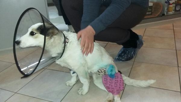 Спасенному в Липицах щенку нужны хозяин и дом