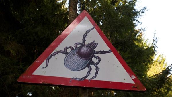 Роспотребнадзор предупреждает об активности клещей