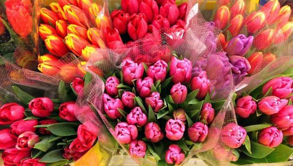 Как выбрать тюльпаны