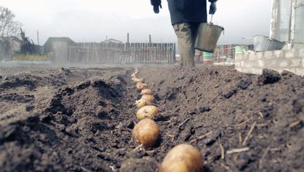 Удар по садоводству. За посадку картошки будут штрафовать