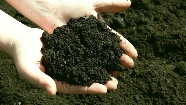 В минэкологии намерены уберечь ценные почвы на юге Подмосковья