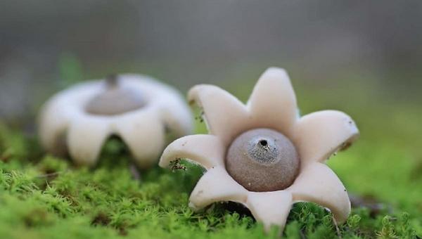 В Подмосковье обнаружили необычные грибы
