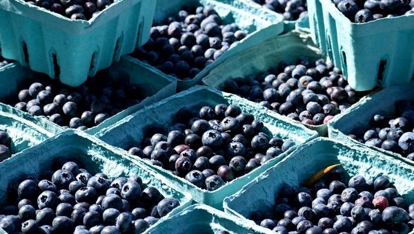 На рынках Подмосковья нашли радиоактивные ягоды