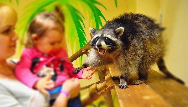 В России будут запрещены привычные контактные зоопарки