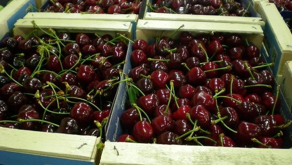 Грабители расстреляли продавца фруктов ради ящика вишни