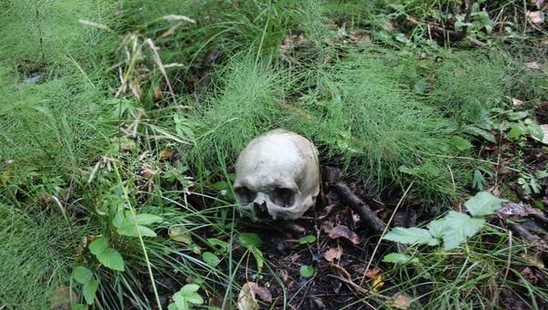 В Подмосковном лесу нашли человеческий череп