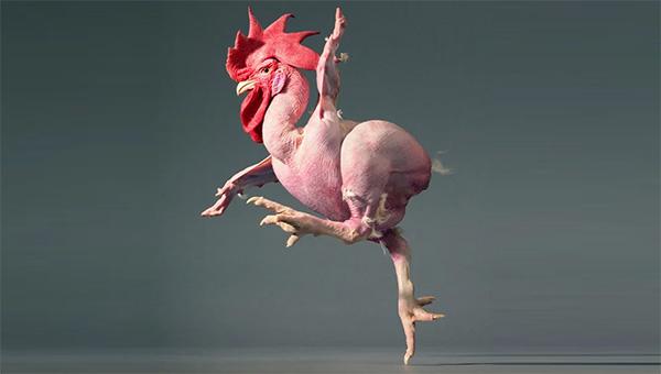 Какое куриное мясо опасно для здоровья