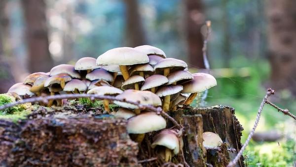 Микологи пообещали любителям тихой охоты вторую грибную волну