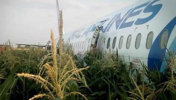 К медикам обратились уже более полусотни пассажиров самолета с кукурузного поля