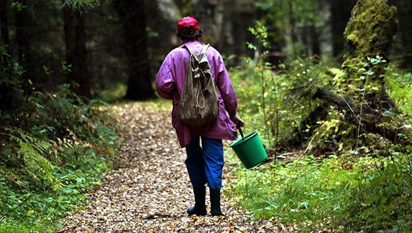 Когда идешь в лес – не забудь документы. Иначе оштрафуют!