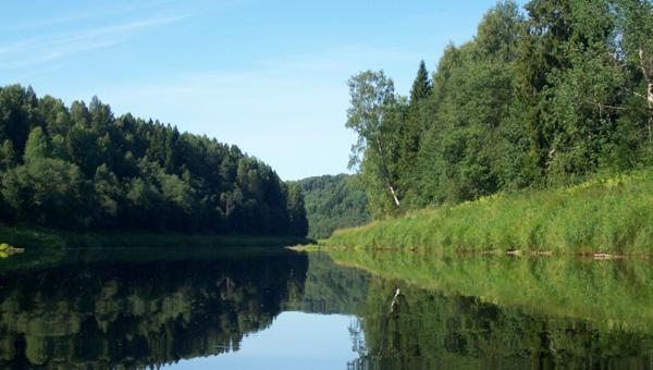 «Русский лес» может стать природным парком