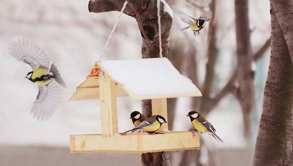 Орнитологи рассказали, чем и как подкармливать птиц