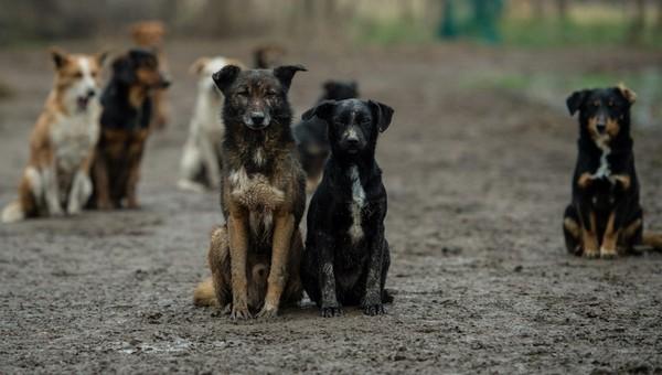 Бездомных животных Серпухова стерилизуют и привьют на... 21000 рублей