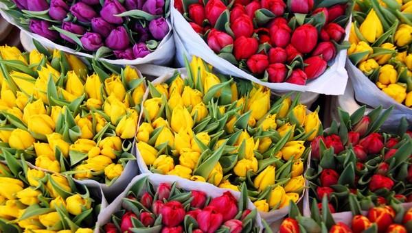 Тюльпаны почем? Мы узнали расценки на самые весенние цветы