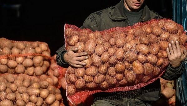 Мужик пытался вывезти с поля 16 мешков картошки