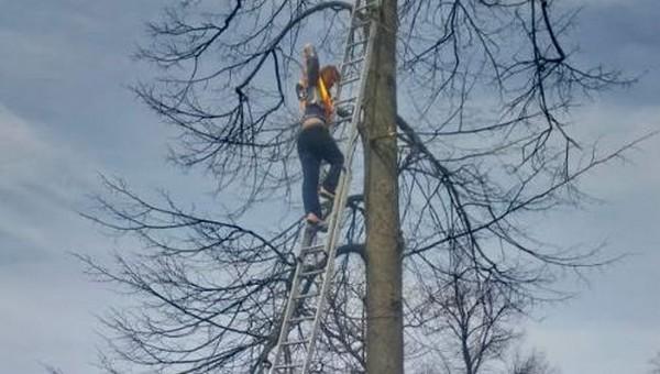 Сердобольная дама застряла на дереве вместе с котенком