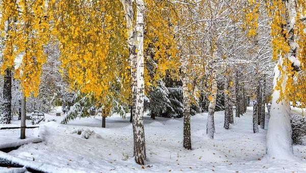 Снег в Подмосковье может посыпаться уже на этой неделе