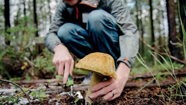 Какие грибы и ягоды несут из подмосковных лесов сейчас?