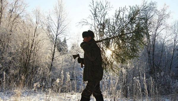Что будет, если застукают в лесу с ёлкой