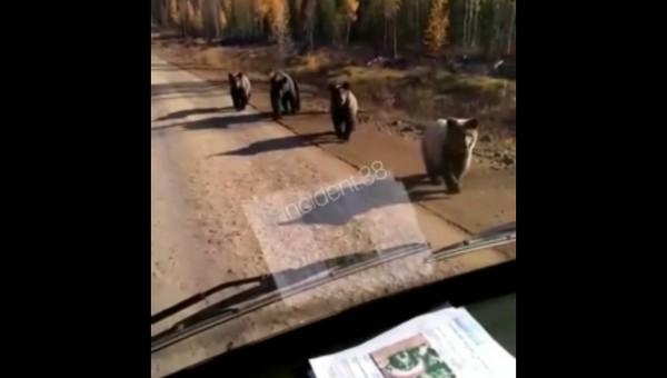 На российской трассе появились медвежата-рэкетиры