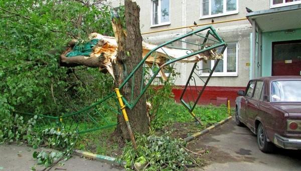 Около сотни деревьев повалило за минувшую ночь в Подмосковье