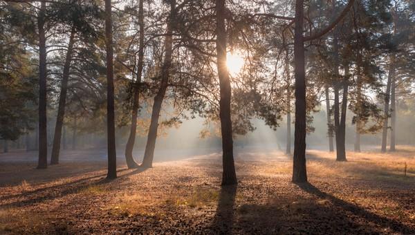 Жителям столичного региона пообещали солнечную неделю