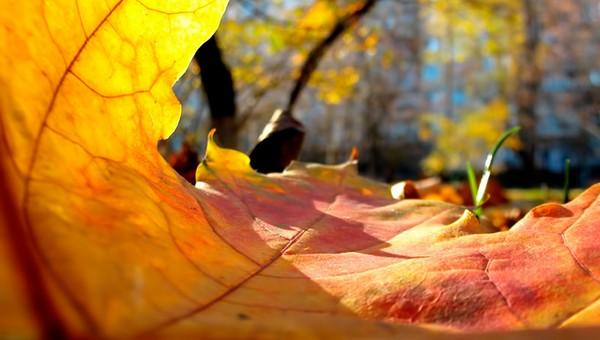 В начале ноября в Подмосковье ожидается аномальная погода
