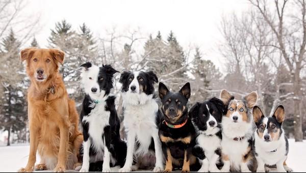 В кинологической федерации назвали самые популярные клички собак в России
