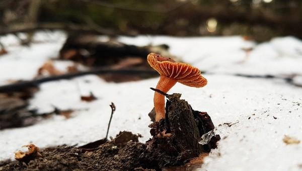 В лесах Подмосковья уже начали появляться съедобные грибы