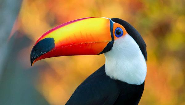 Крупнейший в России парк птиц просит о помощи в содержании питомцев