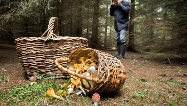 В подмосковных лесах за три дня потерялись больше 100 грибников