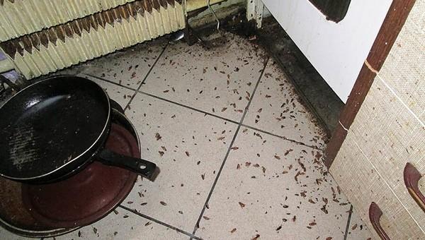 Роспотребнадзор предупредил о грядущем нашествии тараканов