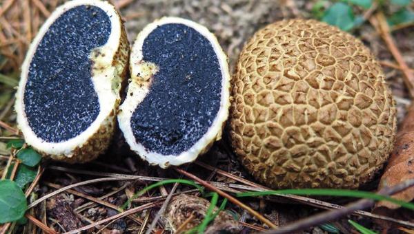 Удивительные камни найдены в лесах Подмосковья