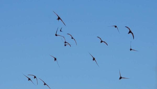 Птицы улетают на зимовку