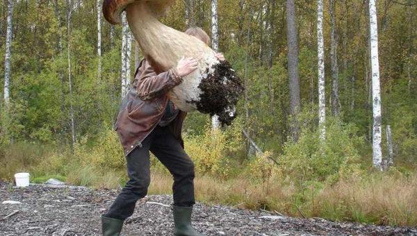 В подмосковных лесах продолжают расти грибы