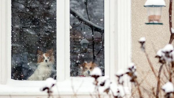 От оттепели до крепкого мороза. Каким будет предстоящий январь в центральной России?