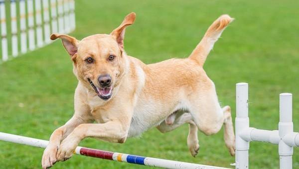 В Серпухове появится площадка для выгула собак почти за 2 миллиона