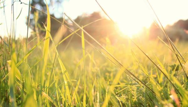 Летняя погода заглянет в Подмосковье скоро, но ненадолго