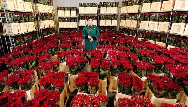 Серпухов собираются засыпать свежими цветами на 2,5 миллиона