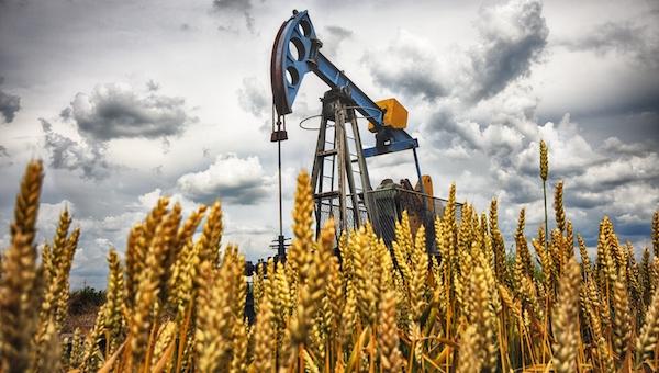 Российская пшеница взлетела в цене и стала дороже нефти