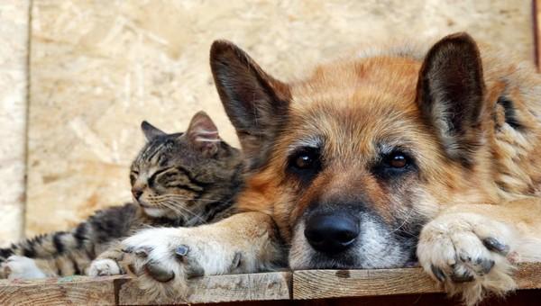 В Серпухове с безнадзорными животными разберутся за 9200 рублей